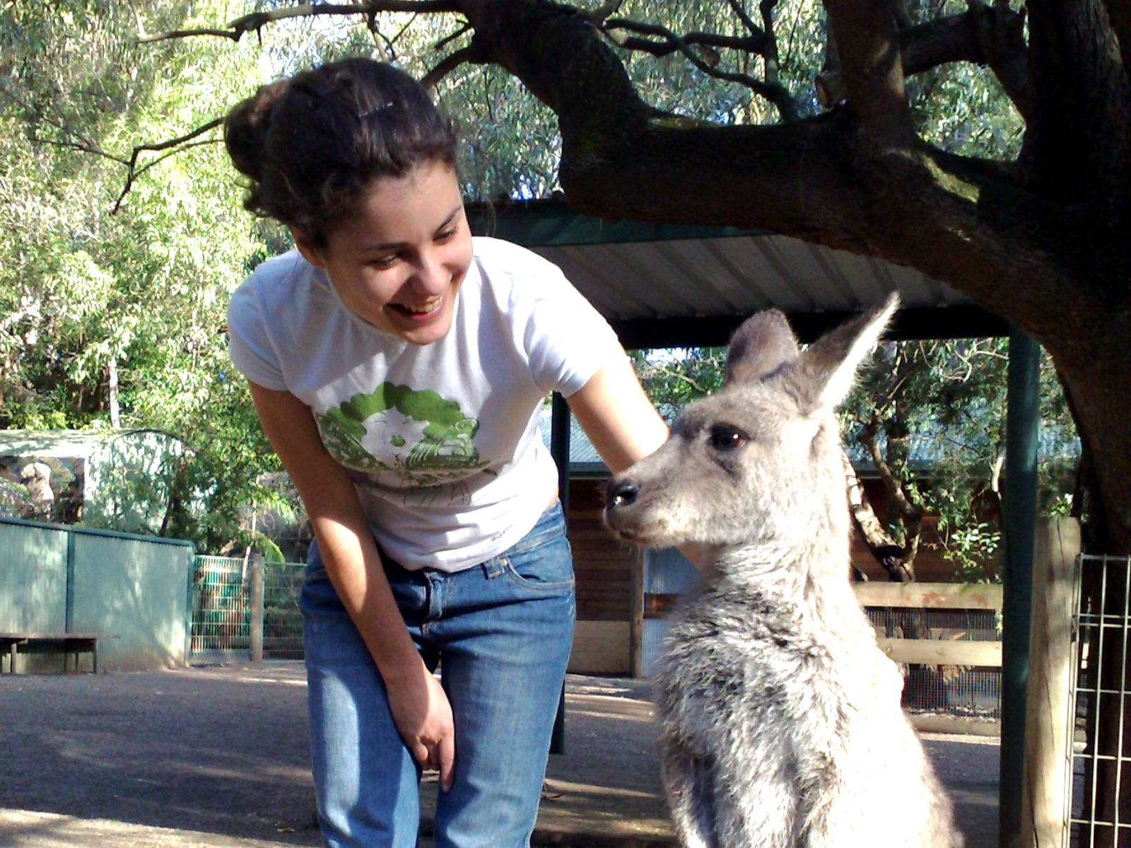 Expat in Australia with cangaroo